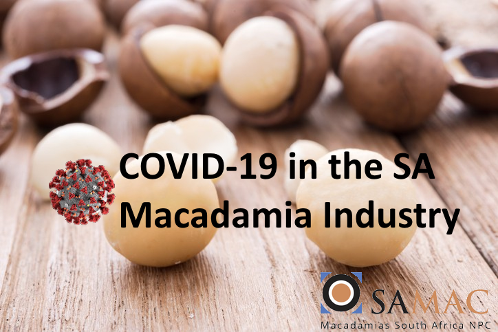 Macadamias-On-a-mission-to-crack-the-on-trend-nut-market_wrbm_large